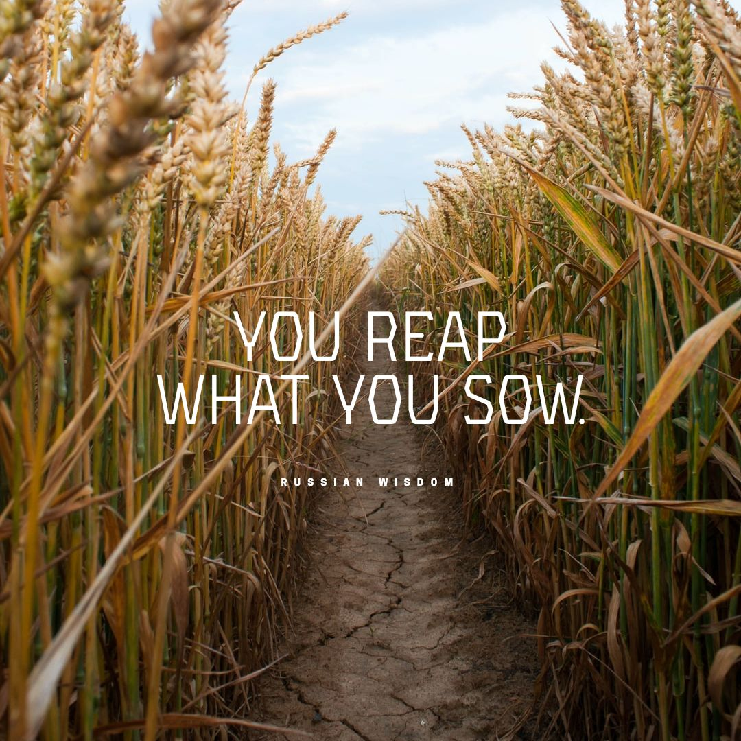 Quotes image of You reap what you sow.