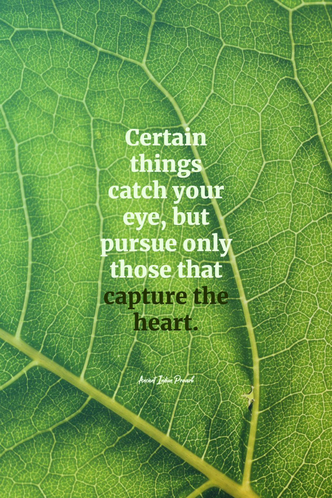 Quotes image of Certain things catch your eye, but pursue only those that capture the heart.