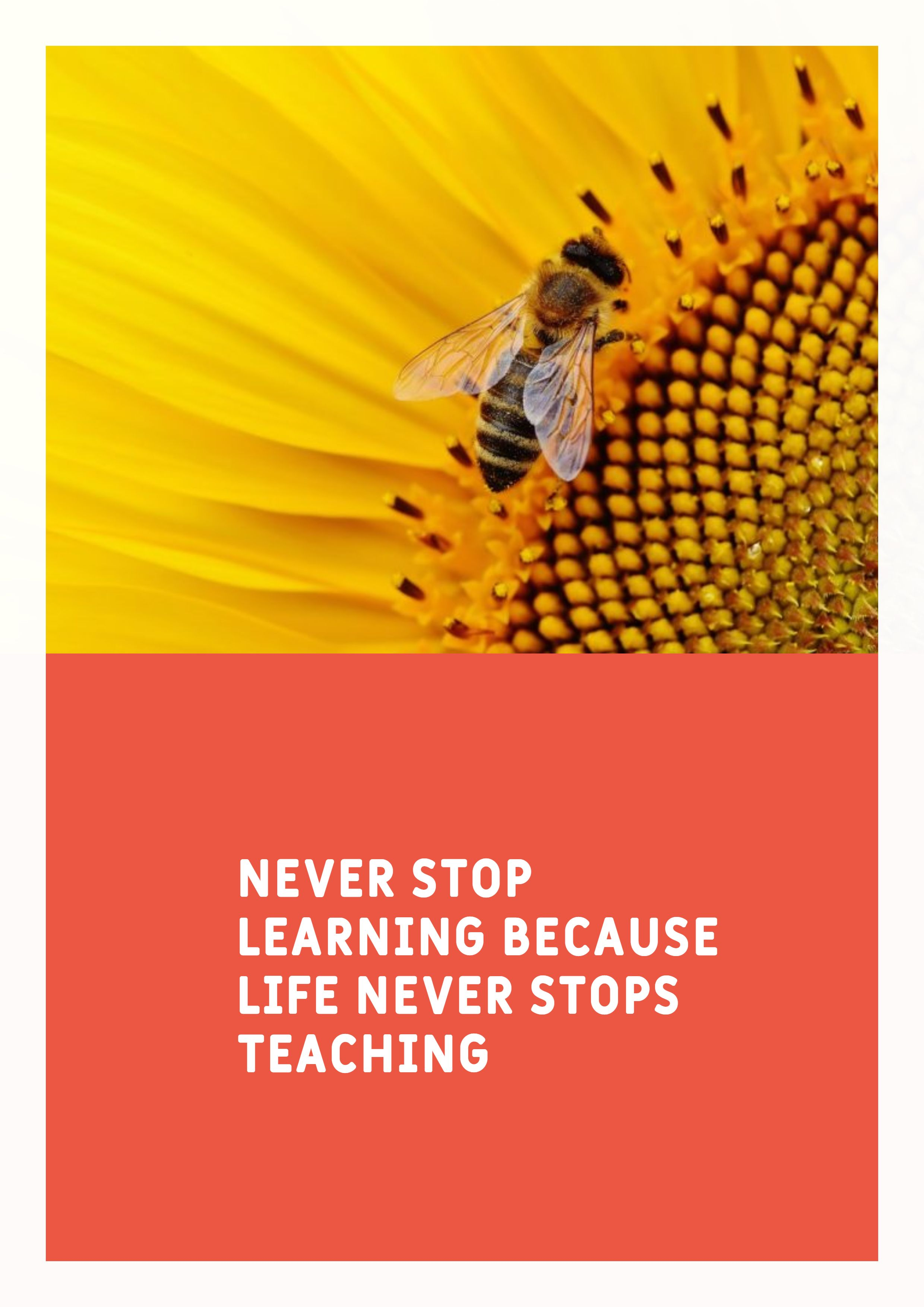 Quotes image of Never stop learning because life never stops teaching