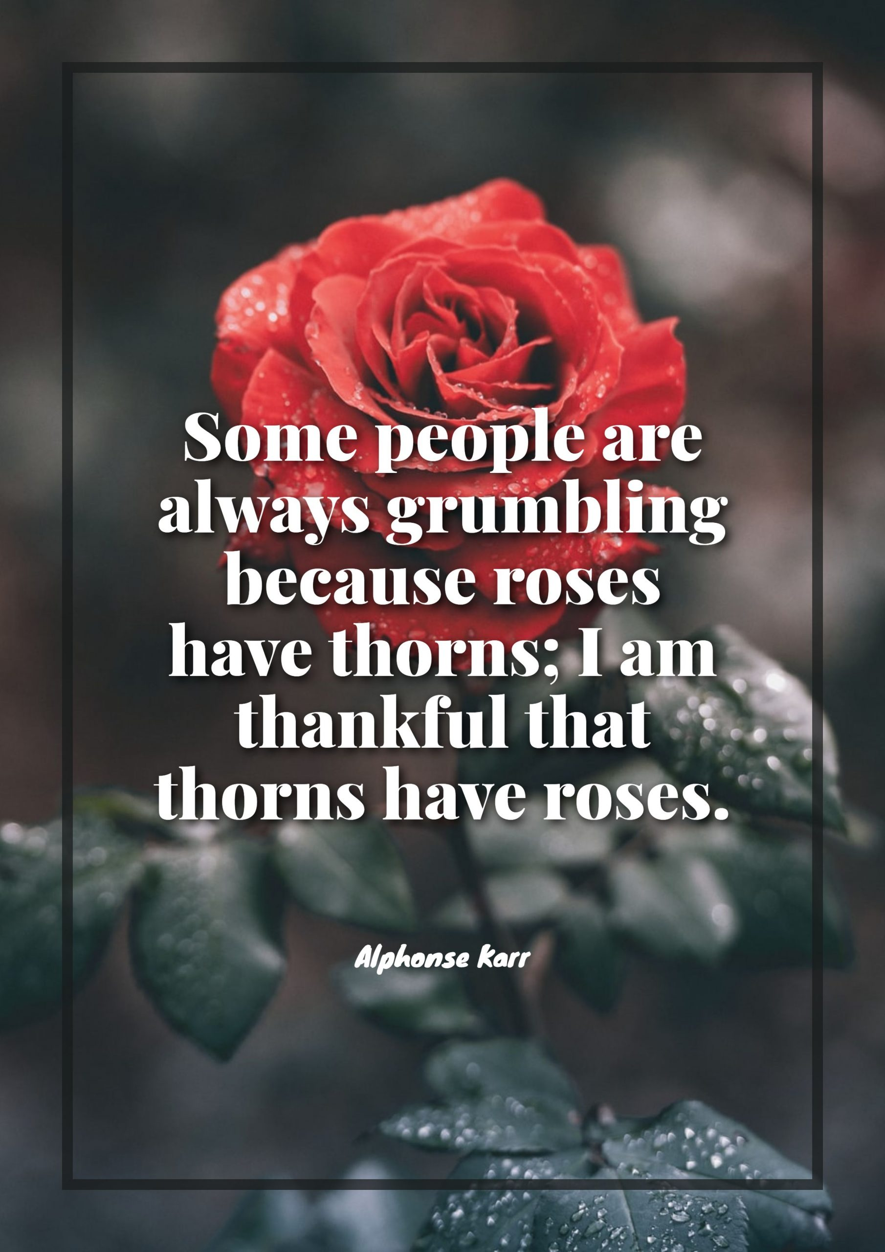 Quotes image of Some people are always grumbling because roses have thorns; I am thankful that thorns have roses.
