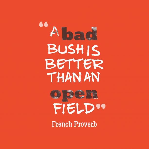 French wisdom about bush
