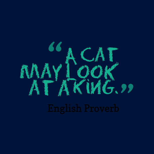 English Wisdom 's quote about . A cat may look at…