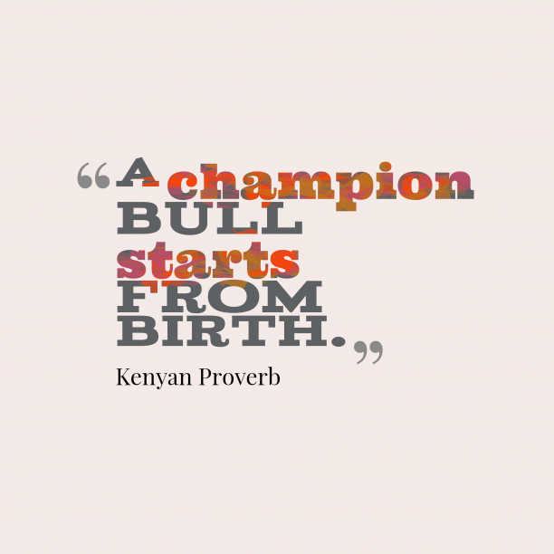 Kenyan Wisdom 's quote about Champion. A champion bull starts from…