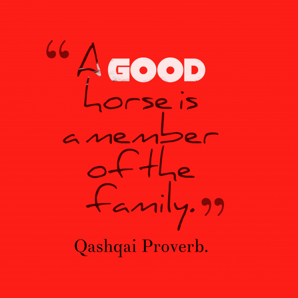 Qashqai Wisdom. 's quote about . A good horse is a…