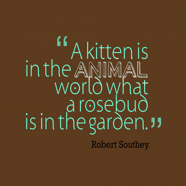 Robert Southey 's quote about . A kitten is in the…