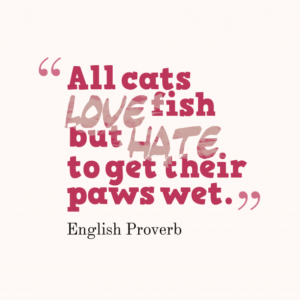 English Wisdom 's quote about . All cats love fish but…