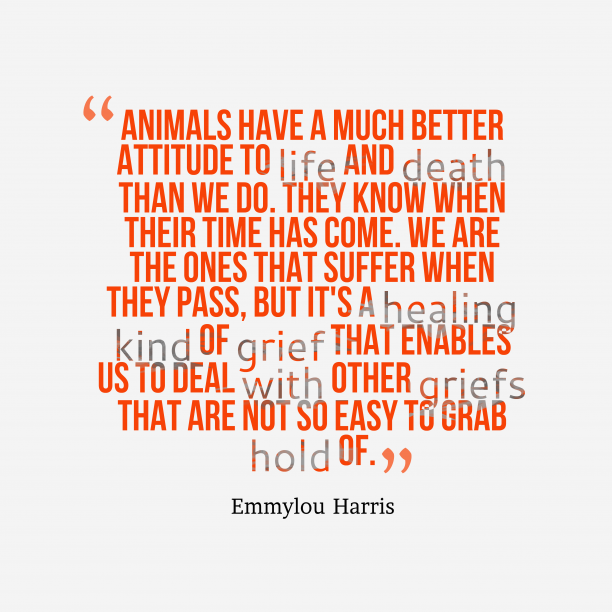 Emmylou Harris 's quote about animal. Animals have a much better…