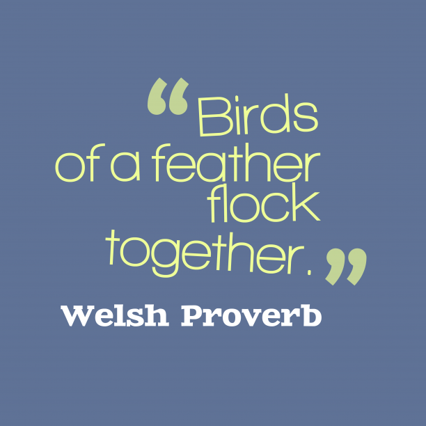 Welsh Wisdom 's quote about Bird. Birds of a feather flock…