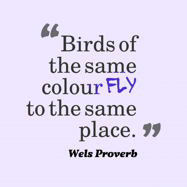 Wels Wisdom 's quote about Same. Birds of the same colour…