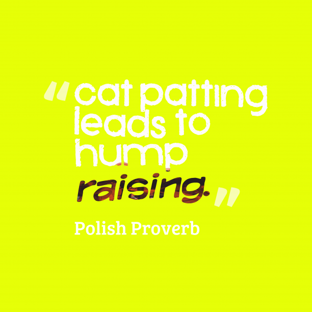 Polish Wisdom 's quote about . Cat patting leads to hump…