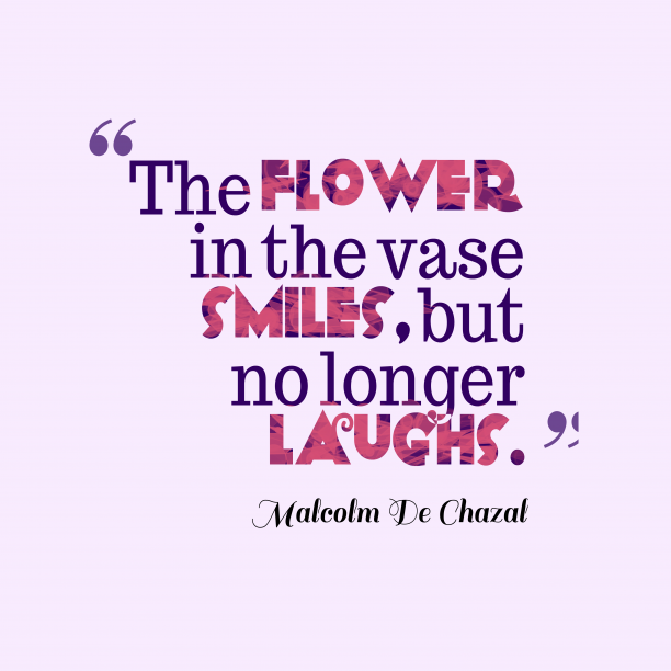 Malcolm De Chazal 's quote about . The flower in the vase…