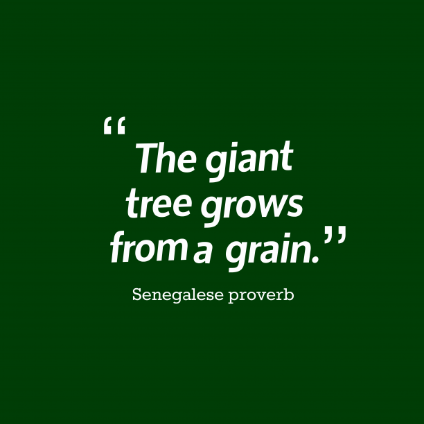 Senegalese proverb 's quote about . The giant tree grows from…