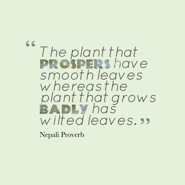 Nepali proverb about talent.