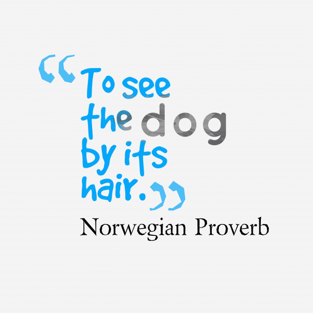 Norwegian Wisdom 's quote about . To see the dog by…
