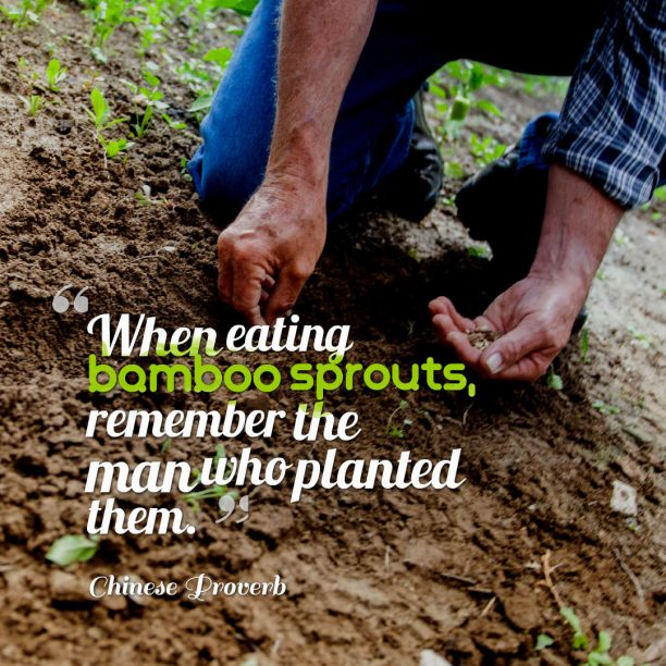 Chinese Wisdom 's quote about . When eating bamboo sprouts, remember…